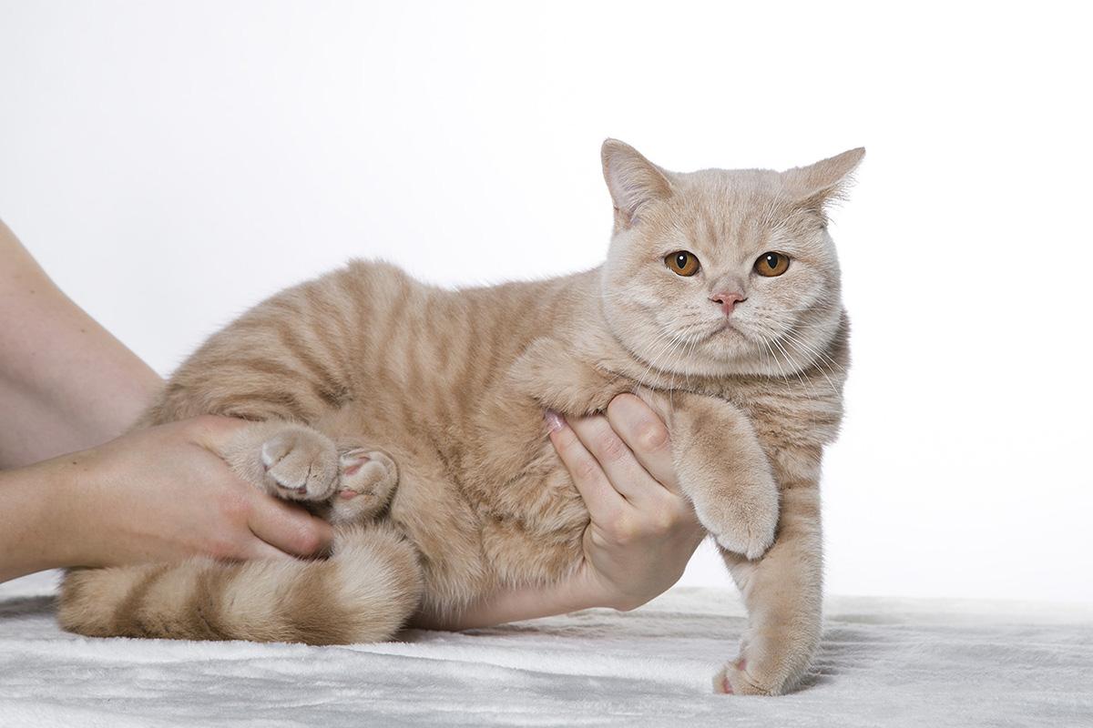 macska, Kóti Kata Photography